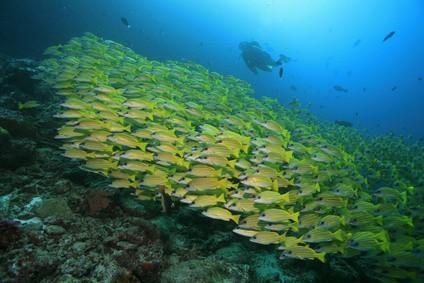 Farbenprächtige Unterwasserwelt