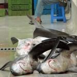 Der Fischfang spielt in Agadir eine große Rolle.