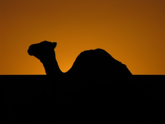 Die Kameltour ist die schönste Art des Reisens.